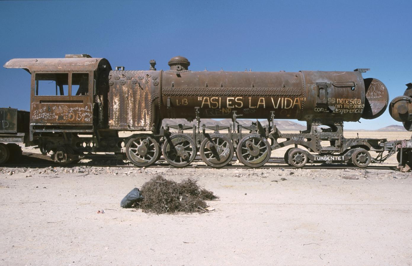 lama-glama-24-bolivia-2001