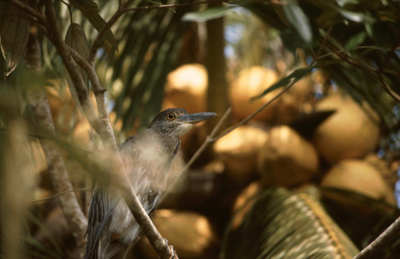 bird-costa-rica-2000